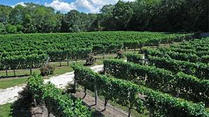 Cape May vineyards