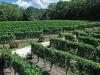 cape-may-vineyards